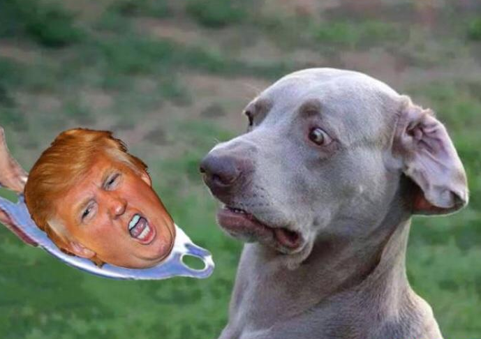 dog repulsed by Trump