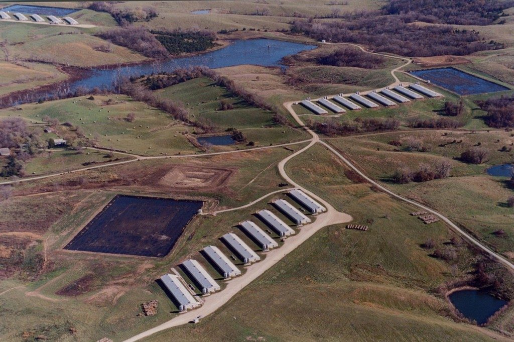 aerial view of pig farm
